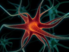 Ученые описали точный механизм воздействия алкоголя на клетки мозга