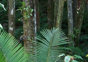 Ученые обвинили древних людей в исчезновении африканских тропиков