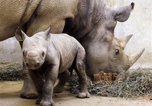 В США китайцев обвинили в контрабанде рогов черных носорогов