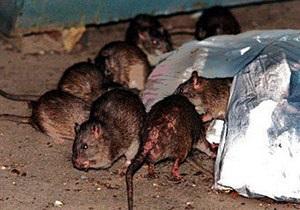 В Бельгии из квартиры выселили более 40 гигантских крыс