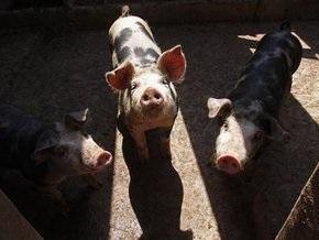 Три человека с симптомами свиного гриппа госпитализированы во Франции