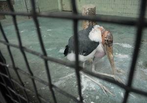 СМИ: Животных в Киевском зоопарке кормят испорченными продуктами