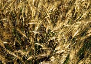 Янукович отменил пошлины на экспорт пшеницы и кукурузы