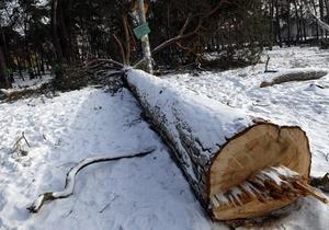 В сквере возле метро Дарница вырубили деревья, посаженные Кличко три месяца назад