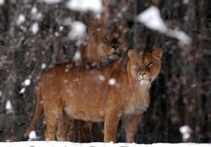 Ветеринары киевского зоопарка из-за морозов работают в усиленном режиме