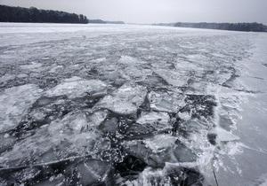 Польские моряки спасли собаку, проплывшую на льдине более 100 километров