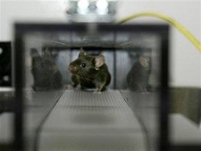 Лабораторной мыши исполнилось 100 лет