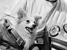 В Москве установят памятник первой собаке-космонавту