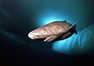 Самая медленная акула передвигается медленнее черепахи