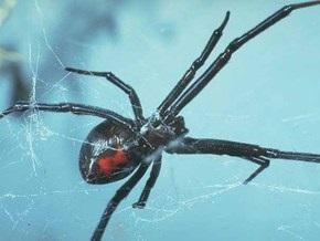 На юге Украины люди страдают от укусов ядовитых пауков