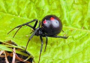 В Херсонской области ядовитый паук укусил женщину