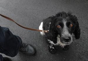 В Киеве зарегистрировали новые случаи бешенства у животных