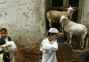 Новости Индии - странные новости: В Индии трех козлов задержали по подозрению в порче имущества