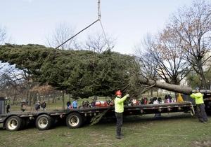 Власти итальянского города ищут спонсора для приобретения новогодней ели