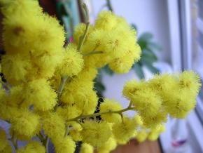 Украинские продавцы цветов 8 марта понесли убытки