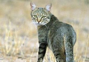 В Крыму больной бешенством кот напал на своих хозяев