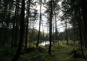 В России суд лишил родительских прав семью готов, жившую в лесу