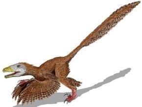 В Китае обнаружили останки динозавра с четырьмя крыльями