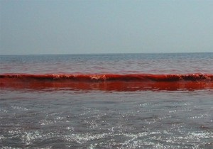 Море возле Бердянска стало кроваво-красным