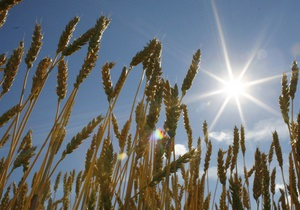 Ъ: Украина может возобновить поставки зерна в Египет