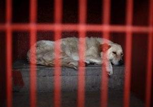 В Мехико защитники животных требуют отпустить собак, арестованных за убийство