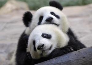 В Китае построят первую в мире больницу для панд