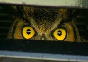 Новости США: Сбитая американкой сова почти сутки провела за решеткой радиатора автомобиля