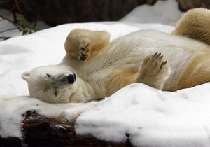 В Московском зоопарке неизвестный стрелял в медведя