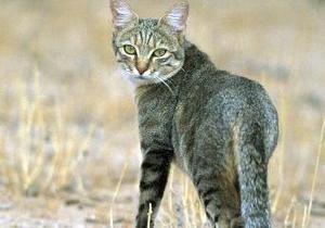 В Херсонской области бешеная кошка напала на двух женщин