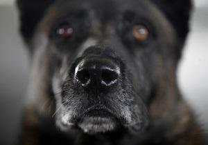 В Одесской области гаишники спасли девочку от собак