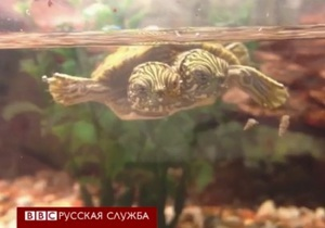 Тельма и Луиза, двухголовая черепаха - видео