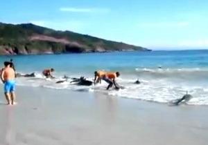 В Австралии на берег выбросились около 90 дельфинов