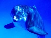В Украине введен временный запрет на ловлю дельфинов