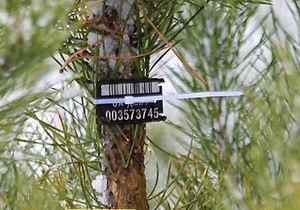 Украинцы, у которых обнаружат елку без чипа, будут оштрафованы