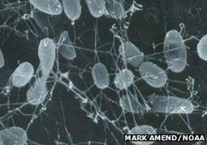 Ученые: Микробы будут последними организмами на Земле