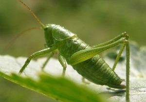 ООН призывает голодающих есть насекомых