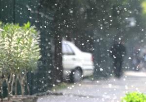 Эксперты: Киевлян, страдающих аллергией на тополиный пух, может спасти только дождь