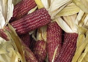 Ученые узнали, когда индейцы Перу окультурили кукурузу