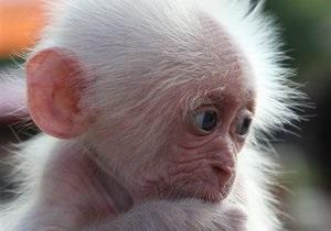 В киевском зоопарке родилась мартышка
