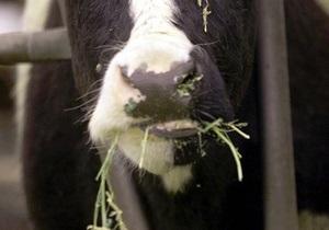Фермер из штата Нью-Йорк расстрелял 51 корову и покончил с собой