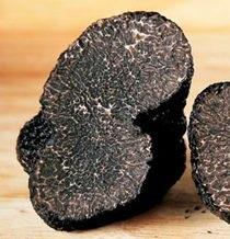 Французы вырастят черные трюфели методом клонирования