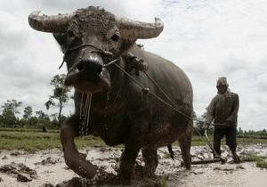 экспорт крупного рогатого скота