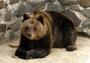 Медведи и скунсы из уникального зоопарка на севере Украины не могут впасть в спячку
