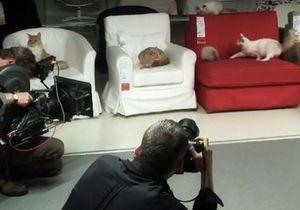 В новой рекламе IKEA запустила в магазин 100 котов