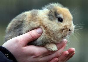 В немецком зоопарке безухий кролик погиб на устроенной в его честь пресс-конференции