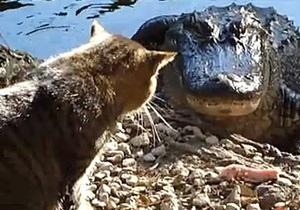 Одесский зоопарк опроверг слухи, что крокодилам скармливают бездомных кошек