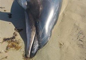 В Крыму на глазах у отдыхающих умер дельфин, которого привязали к трактору