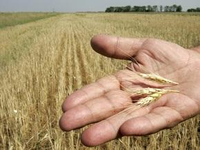 Цена пшеницы упала до минимума с апреля 2007 года