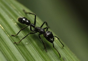 В английском графстве Дербишир подсчитают муравьев
