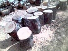 В Украине началась борьба с черными лесорубами
